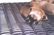 Luchtbed voor pups of pluimvee