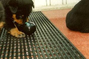 Roosterbed voor hond, kitten, pluimvee